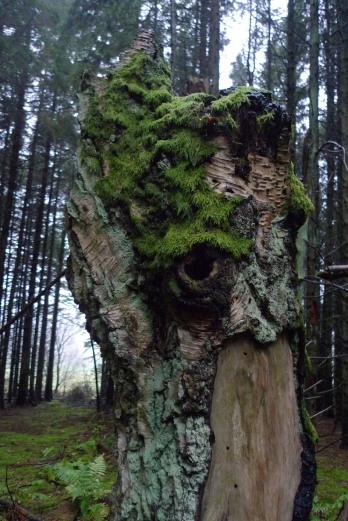 Battlehill-standing-tree